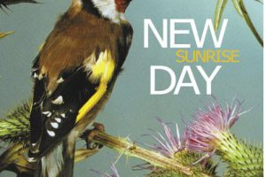 new day estrena vídeo para free