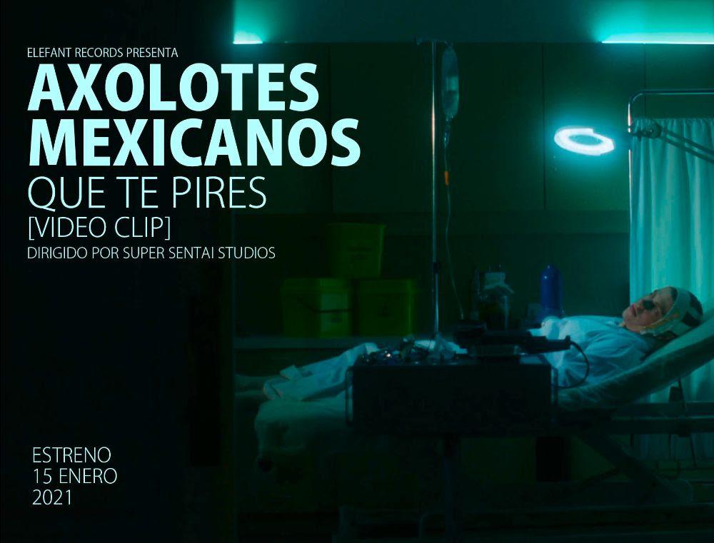 que-te-pires-axolotes-mexicanos